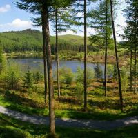 Nant yr Arian - forestry with cycle trails & red-kite feeding
