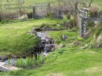 Stream flowing into wildlife pond