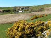 View of farm with gorse